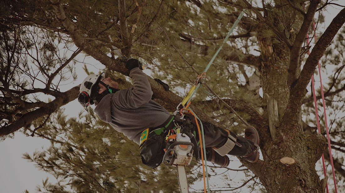 Arborxpert Tree & Shrub Care Inc.: Emergency tree removal in Ottawa, Russell and Clarence-Rockland