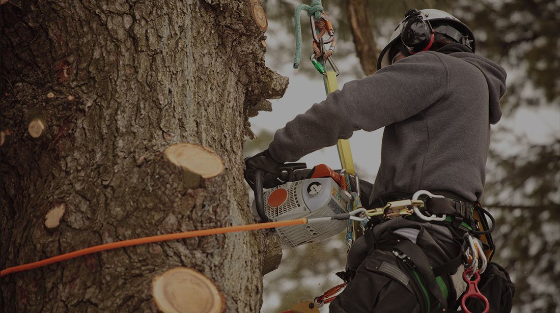 Arborxpert Tree & Shrub Care Inc.: Stump and tree removal in Ottawa, Russell and Clarence-Rockland