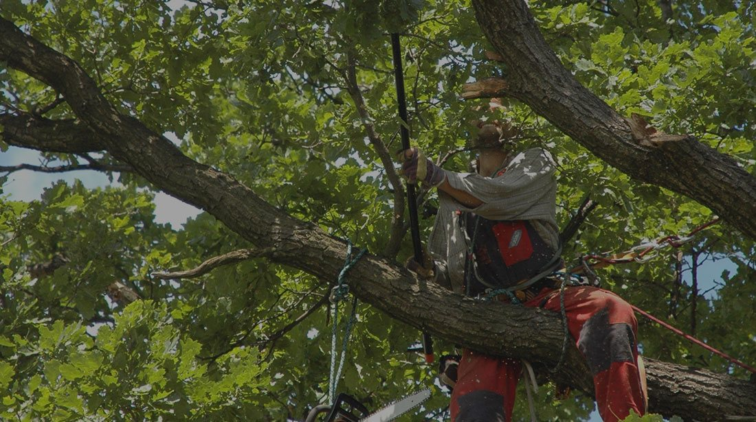 Arborxpert Tree & Shrub Care Inc.: Tree cabling and bracing in Ottawa, Russell and Clarence-Rockland
