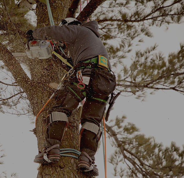 Arborxpert Tree & Shrub Care Inc.: Tree health in Ottawa, Russell and Clarence-Rockland