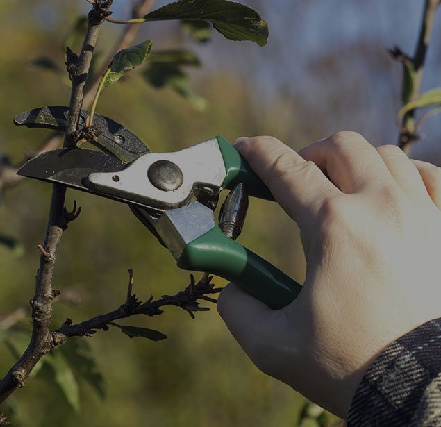 Arborxpert Tree & Shrub Care Inc.: Tree pruning in Ottawa, Russell and Clarence-Rockland